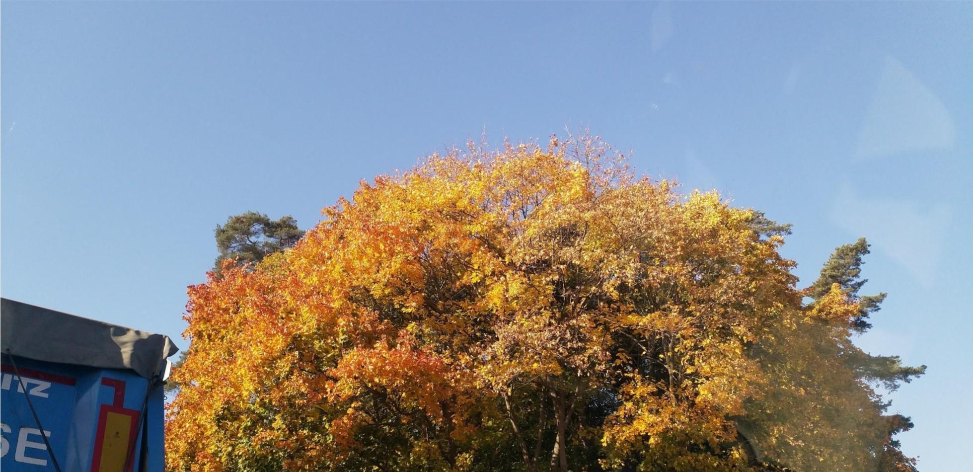 co barwi liście