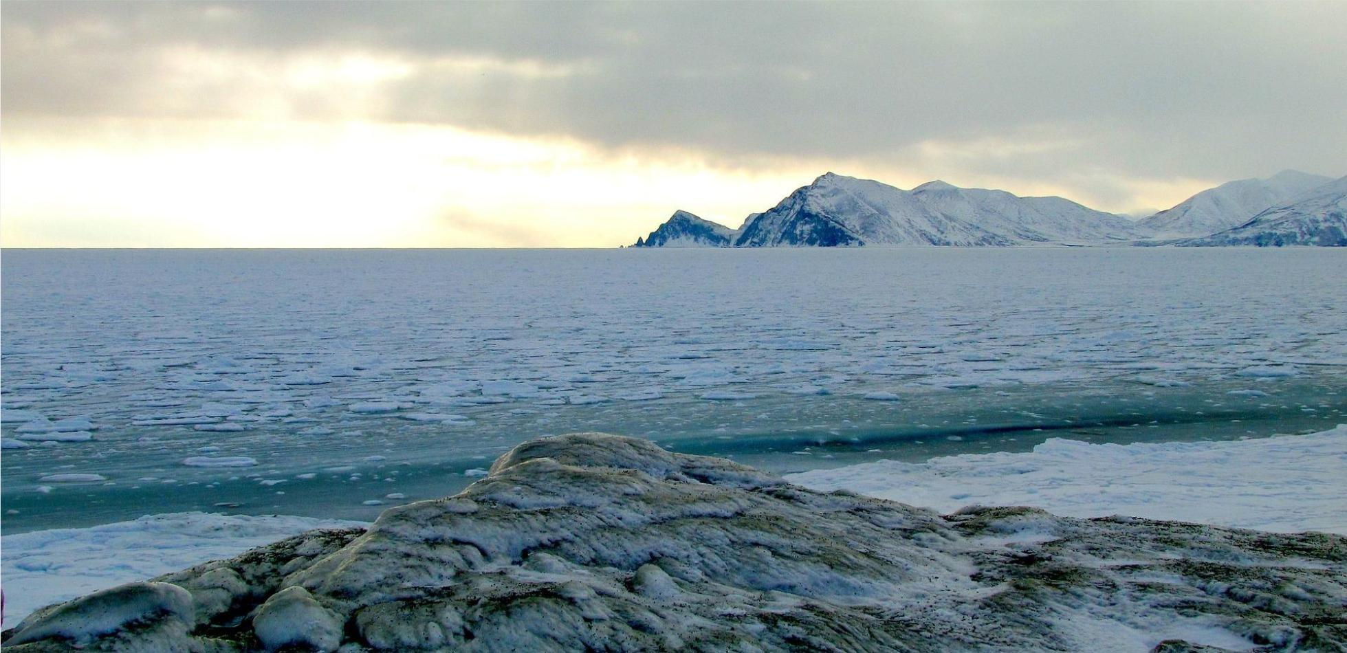 Lód Arktyki