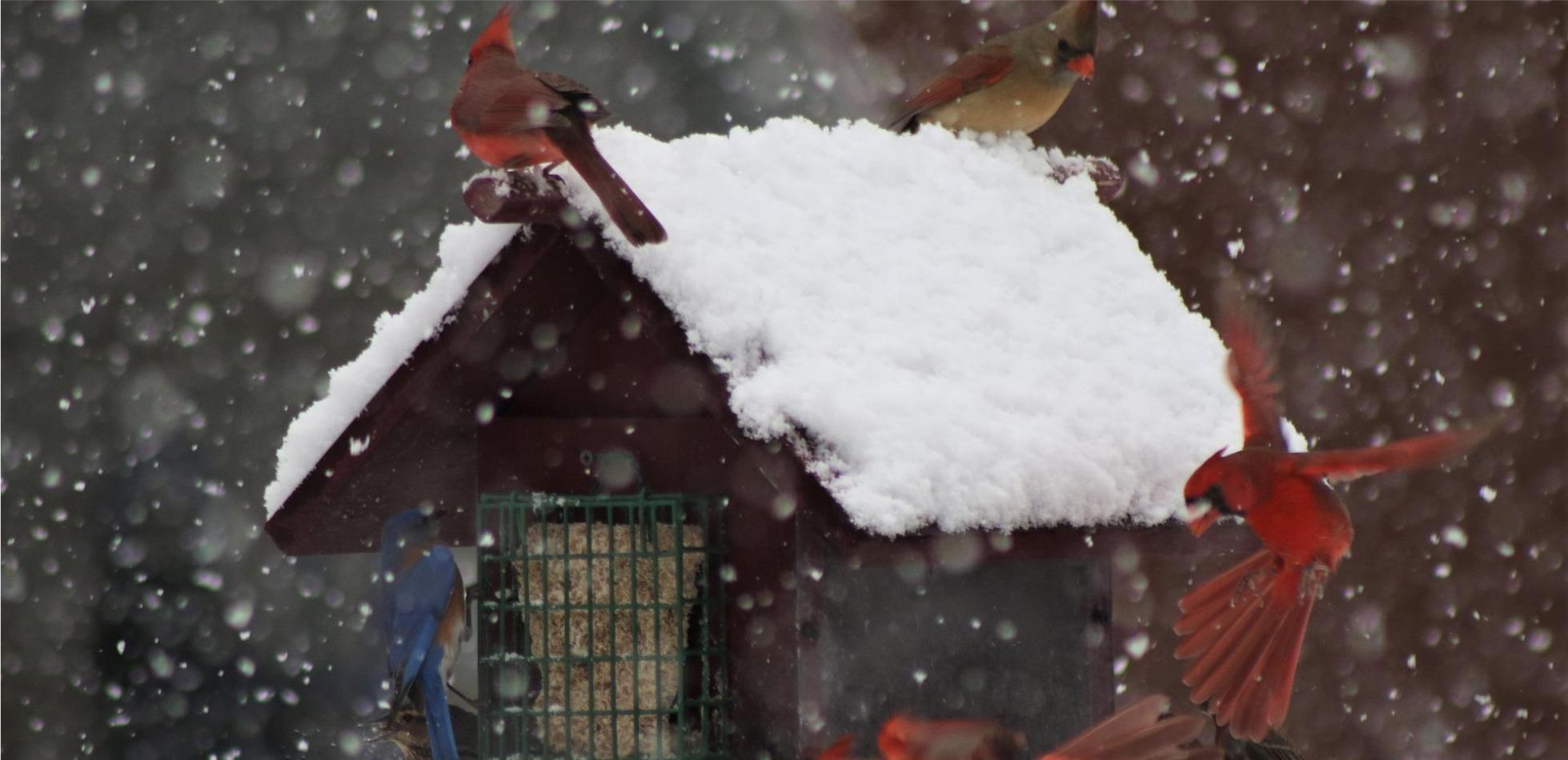 Czy w najbliższych dniach grozi nam incydent zimowy ?