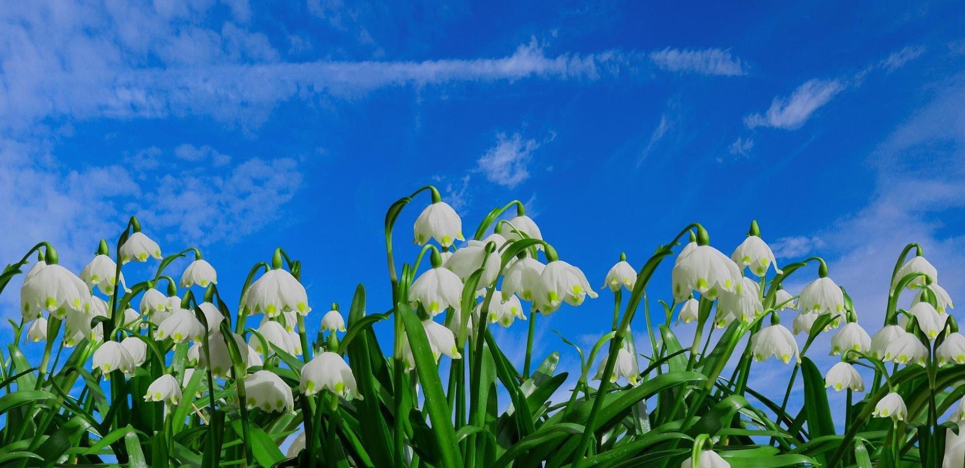 Powiew wiosny, opady i możliwe burze. Prognoza